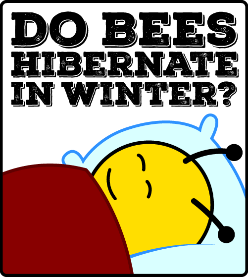 Do Bees Hibernate in Winter?