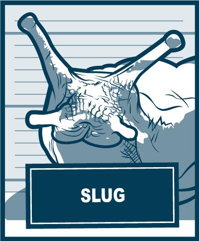 Pests-Slug