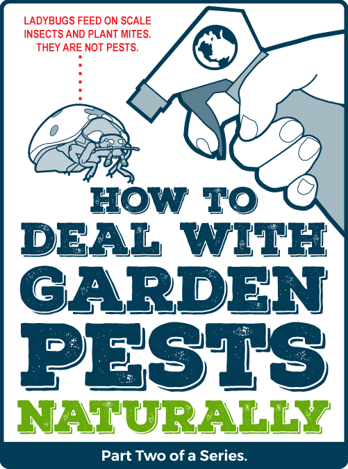How to Deal with Garden Pests Naturally: Growing and Making your own Bug Repellents – Part Two of a Series