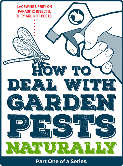 How to Deal with Garden Pests Naturally – Part One of a Series