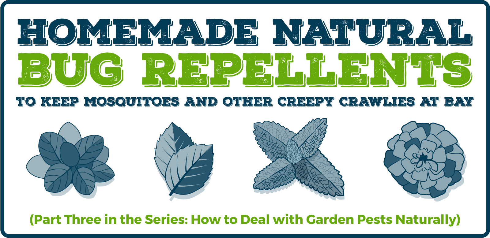 Homemade Natural Bug Repellents: (Part Three in the Series: How to Deal with Garden Pests Naturally)