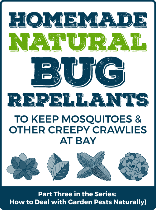 Homemade Natural Bug Repellents to keep Mosquitoes and other Creepy Crawlies at Bay – Part Three of a Series