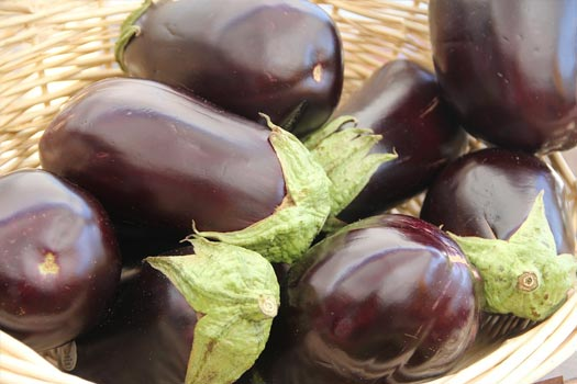 How to Grow Eggplants