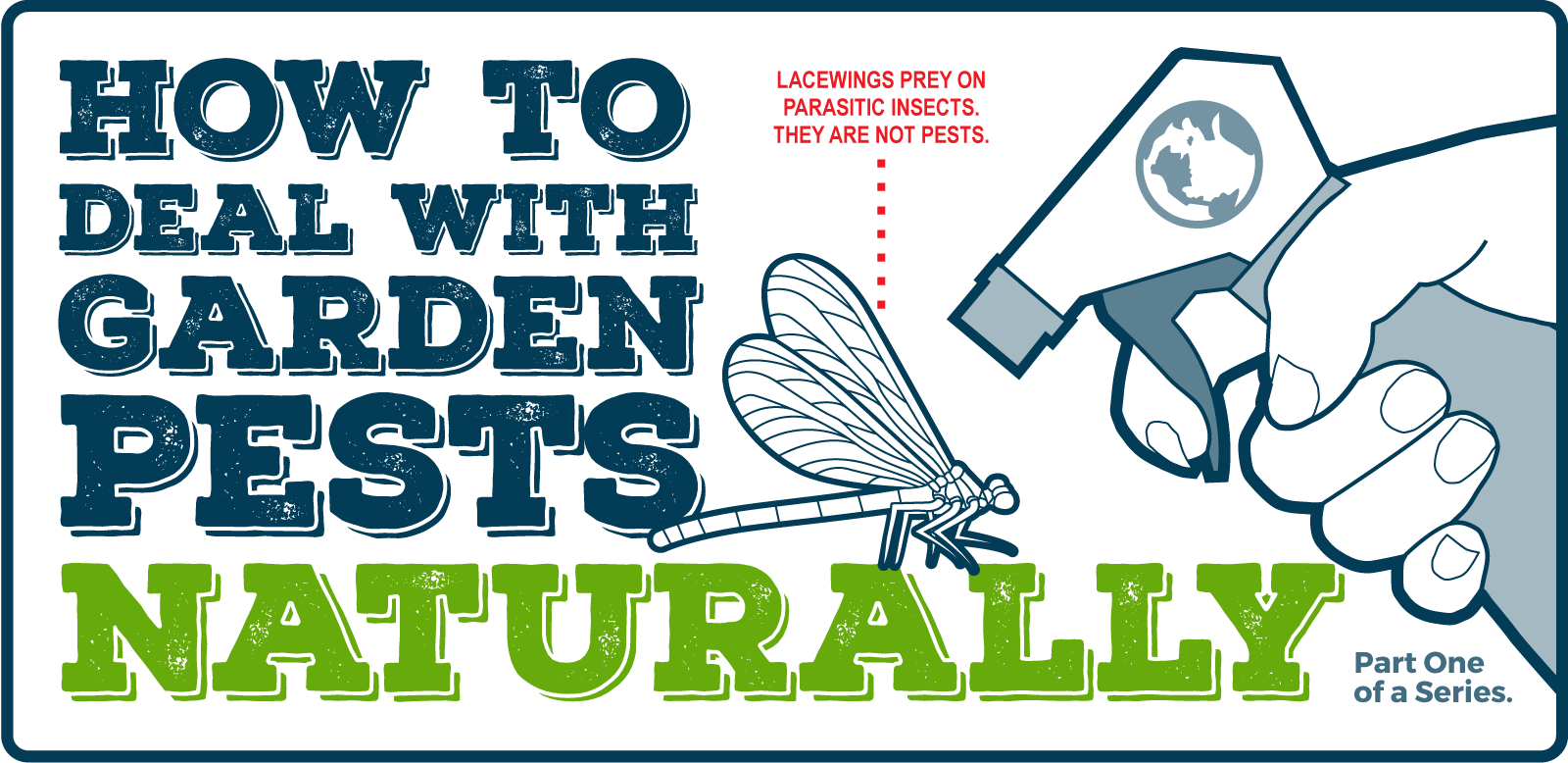 How to get rid of Tomato Plant Pests Naturally.