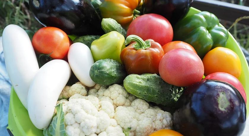 Creating a Family Vegetable Garden